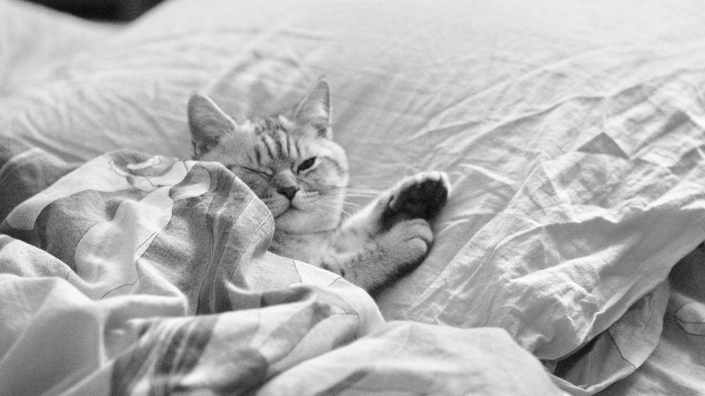 Jak pozbyć się bólu szyi? Zmień poduszkę do spania i zacznij ćwiczyć!